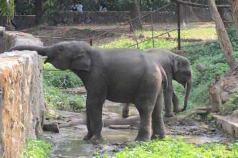 Naypyitaw Zoological Gardens